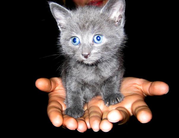 Gelijkaardig kattekopje